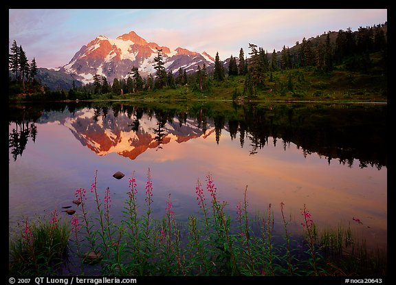 Fireweed flowers, lake with mountain reflections, Mt Shuksan, sunset, North Cascades National Park.  (color)