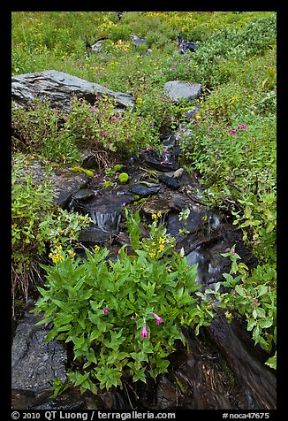 Wildflowers and stream, North Cascades National Park.  (color)