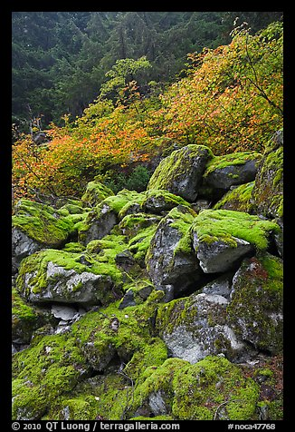 Rocks with green moss, autumn foliage, North Cascades National Park.  (color)