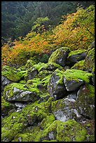 Rocks with green moss, autumn foliage, North Cascades National Park. Washington, USA.