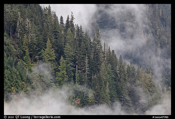 Tree ridge and fog, North Cascades National Park.  (color)