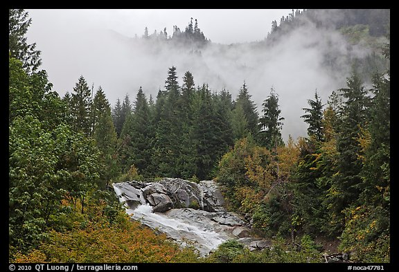 Stream, trees, and fog, North Cascades National Park.  (color)