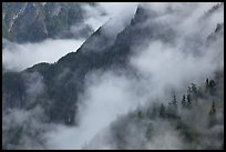 Ridges, trees, and fog, North Cascades National Park.  ( color)