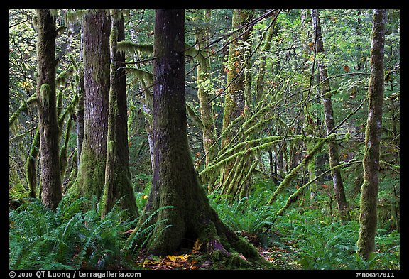 Primeval rainforest, North Cascades National Park Service Complex.  (color)