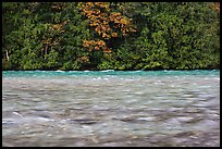 Skagit River during the fall salmon run, North Cascades National Park Service Complex. Washington, USA. (color)