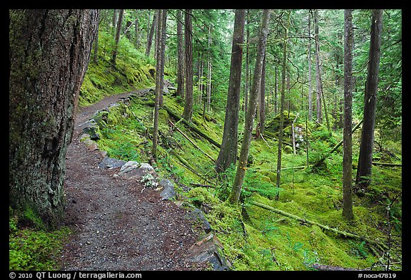Trail in rainforest, North Cascades National Park Service Complex.  (color)