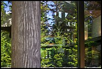 Forest, Visitor Center window reflexion, North Cascades National Park.  ( color)