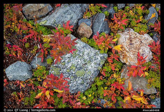 Close-up of rocks with lichen and berry plants in autumn, North Cascades National Park Service Complex.  (color)
