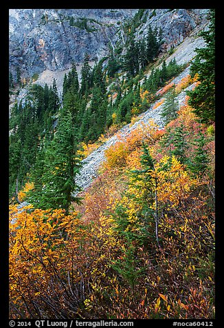 Steep slopes in autumn, North Cascades National Park Service Complex.  (color)