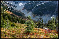Fisher Creek Basin valley, North Cascades National Park.  ( color)