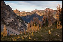 Alpine larch and mountains at sunset, Easy Pass, North Cascades National Park. Washington, USA.