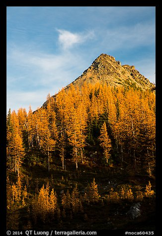 Alpine larch and peak at sunset, Easy Pass, North Cascades National Park.  (color)