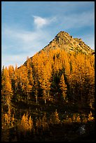 Alpine larch and peak at sunset, Easy Pass, North Cascades National Park.  ( color)