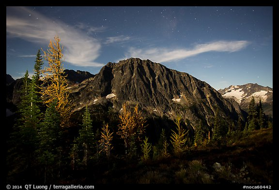 Larches and Mount Logan from Easy Pass at night, North Cascades National Park.  (color)