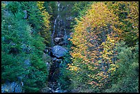 Waterfall in gully bordered by trees in fall foliage, North Cascades National Park Service Complex.  ( color)