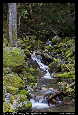 Creek with mossy boulders, North Cascades National Park Service Complex.  (color)
