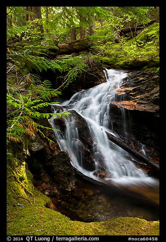 Creek cascading in forest, North Cascades National Park Service Complex.  (color)