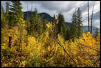 Fall colors and McGregor Mountain, North Cascades National Park.  ( color)