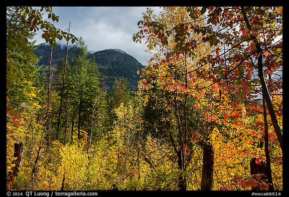 Autumn foliage and McGregor Mountain, North Cascades National Park.  (color)