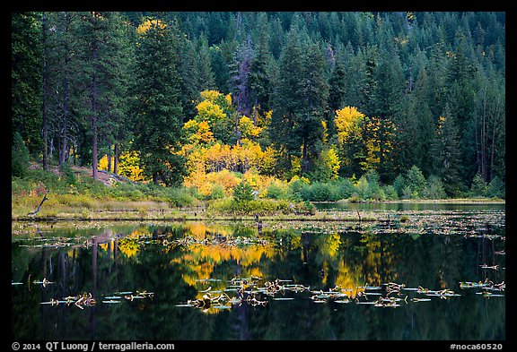 Autumn foliage reflected in Coon Lake, North Cascades National Park Service Complex.  (color)