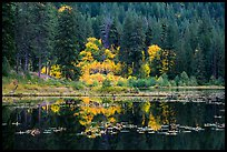 Autumn foliage reflected in Coon Lake, North Cascades National Park Service Complex. Washington, USA.