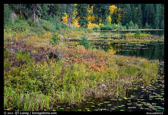 Lakeshore in autumn, Coon Lake, North Cascades National Park Service Complex.  (color)