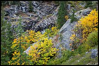 Trees and cliffs in autumn, North Cascades National Park Service Complex. Washington, USA.