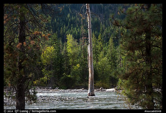Lone dead tree standing in Stehekin River, North Cascades National Park Service Complex.  (color)