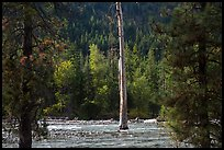 Lone dead tree standing in Stehekin River, North Cascades National Park Service Complex.  ( color)