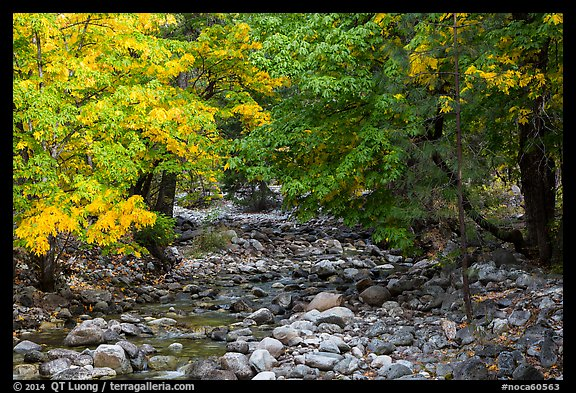 Trees in autum foliage bordering stream, Stehekin, North Cascades National Park Service Complex.  (color)
