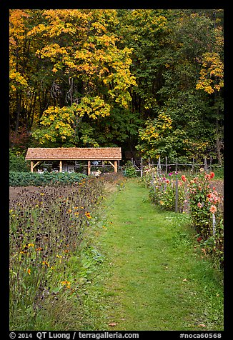Organic garden, Stehekin, North Cascades National Park Service Complex.  (color)