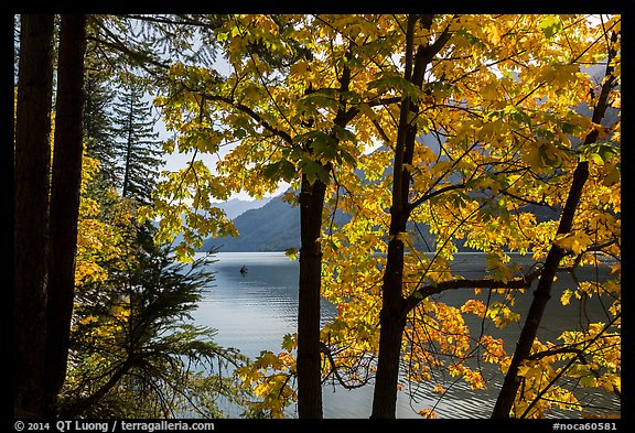 Trees in fall foliage on shore of Lake Chelan, Stehekin, North Cascades National Park Service Complex.  (color)