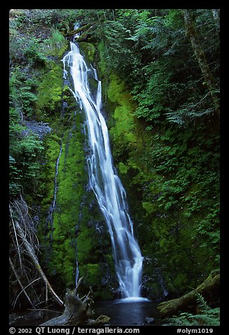 Mossy waterfall , Elwha valley. Olympic National Park (color)