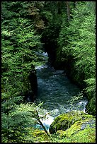 Quinault river in gorge. Olympic National Park, Washington, USA. (color)