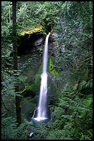 Marymere falls framed by trees. Olympic National Park, Washington, USA.