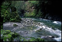 North fork of the Quinault river. Olympic National Park, Washington, USA. (color)