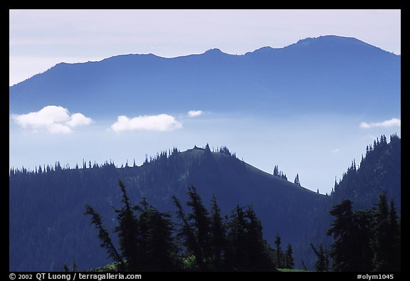 Wind-twisted trees and mountain ridges from Hurricane hill. Olympic National Park (color)