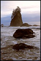 Rocks, seastacks and surf, Second Beach. Olympic National Park, Washington, USA.