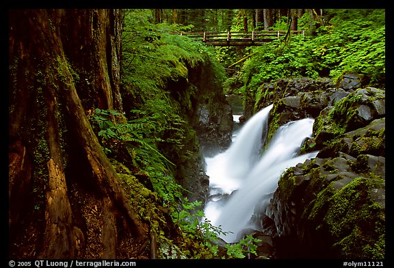 Sol Duc falls and footbridge. Olympic National Park (color)