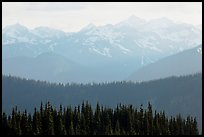 Hazy view of ridges and Olympic mountains. Olympic National Park, Washington, USA. (color)