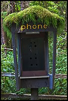 Phone booth covered by moss. Olympic National Park, Washington, USA. (color)