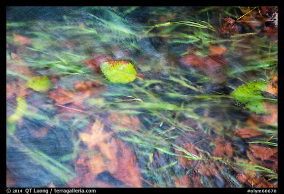 Clear water flowing in creek with grasses and leaves. Olympic National Park (color)