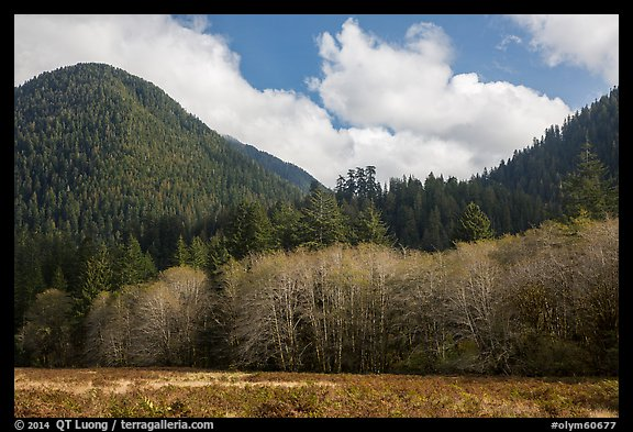 Meadow, trees, and hills in late autumn, Lake Quinault North Shore. Olympic National Park (color)
