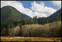 Meadow, trees, and hills in late autumn, Lake Quinault North Shore. Olympic National Park ( color)