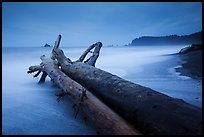 Driftwood and wave motion at dusk, Rialto Beach. Olympic National Park ( color)