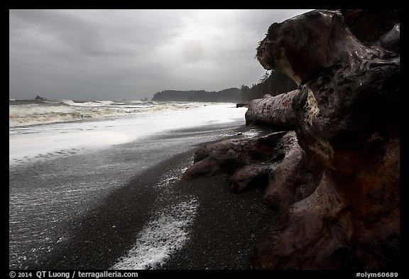 Driftwood and black pebble beach in stormy weather, Rialto Beach. Olympic National Park (color)