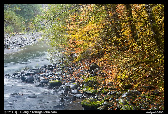 Trees in autumn foliage near Sol Duc River confluence. Olympic National Park (color)