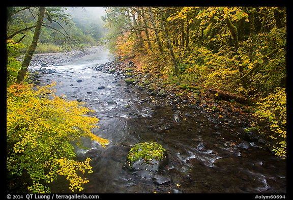 Confluence of North Fork and Sol Duc River in autumn. Olympic National Park (color)