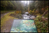 Sol Duc River interpretive sign. Olympic National Park ( color)