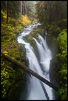 Soleduc Falls dropping into narrow gorge in autumn. Olympic National Park, Washington, USA.